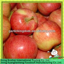 Китай красный гала яблочный поставщик