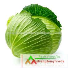 2012 Nouveau chou frais chinois