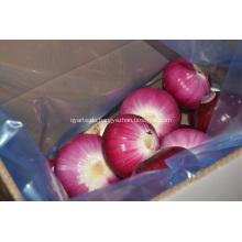 Geschälte rote Zwiebel zum Australien-Markt
