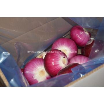 Peeled Red Onion to Australia market