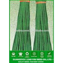 NBE03 Diti china guangzhou graines de légumes semences de haricots à vendre