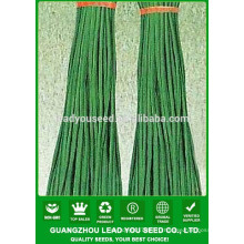 NBE03 Дити Китая семена овощных семена фасоли Гуанчжоу для продажи