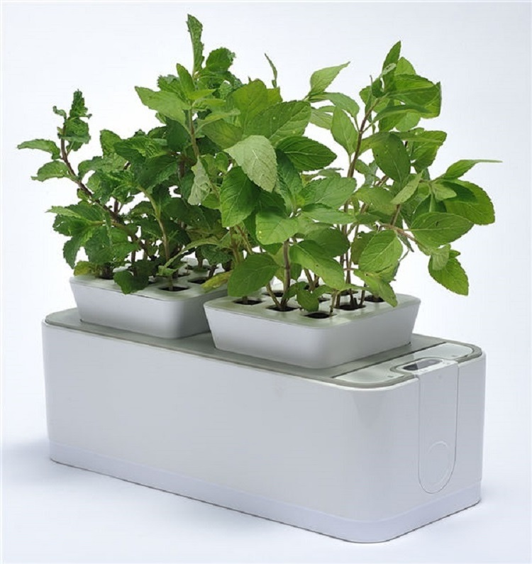 Indoor Mocle Flower Pot Grow System