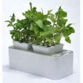 Indoor Planter Growing Rubber Flower Pot