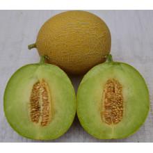 HSM02 Zuiyou global or jaune jaune hybride graines de melon sucré, galia