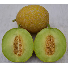 HSM02 Zuiyou globais dourado amarelo F1 híbrido sementes de melão doce, galia