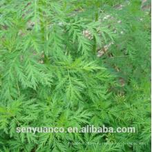 Высокое качество Natural Artesunate