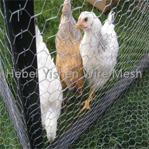 chicken wire mesh electric fence