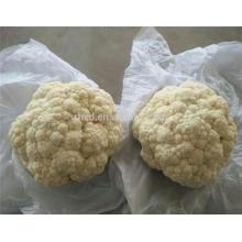 Precio de la coliflor fresca 2017 para la venta