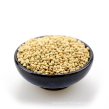 2015 neue Ernte gelb / weiß Besen Mais Hirse zu verkaufen