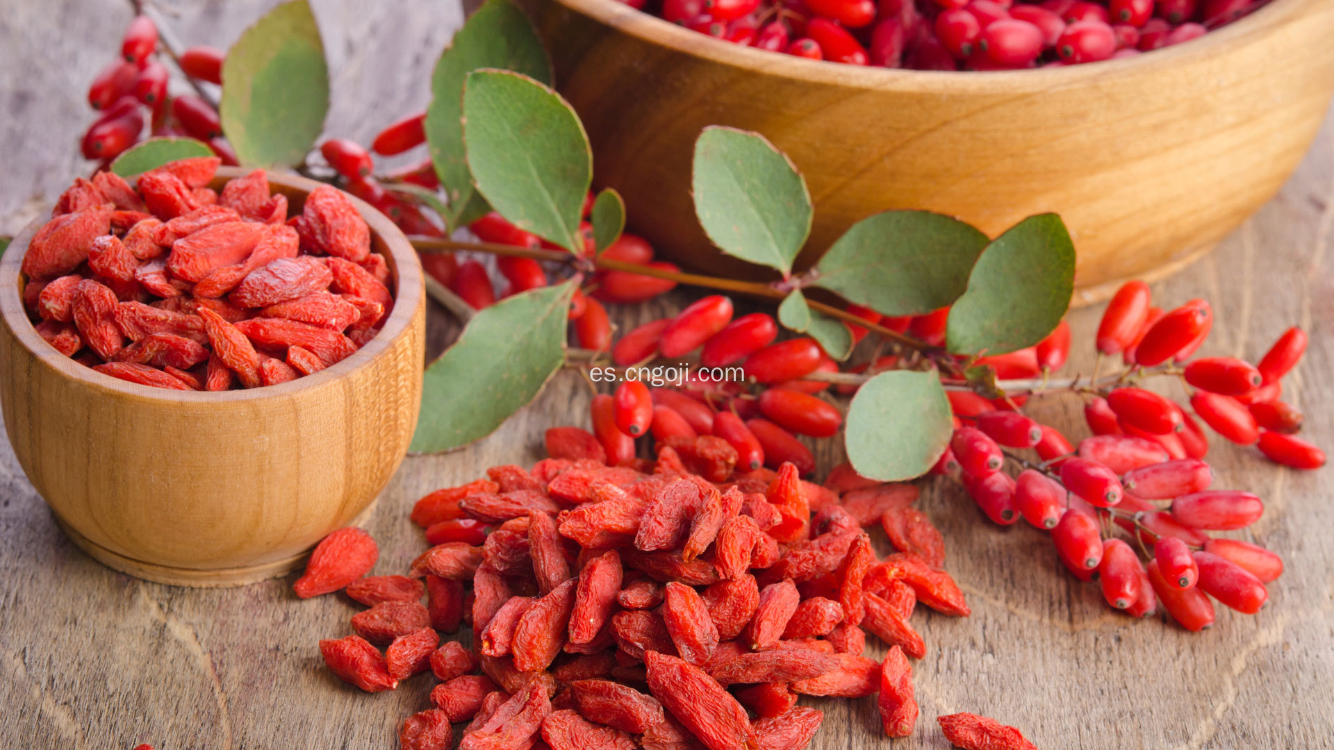 polvo de extracto de goji berry goji guarana