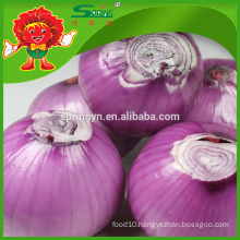 New crop fresh red onion with best price