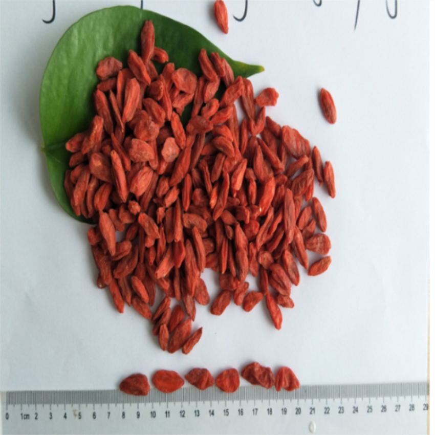 Food Grade New Harvest berry goji / wolfberry