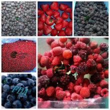 Nova colheita IQF congelado misturado bagas em alta qualidade