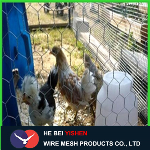 Factory hexagonal wire mesh/chicken wire mesh