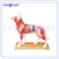 PNT-AM44 Dog Acupuncture Model animal anatomy model