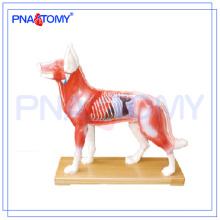 PNT-AM44 modelo de anatomía animal modelo de acupuntura para perros