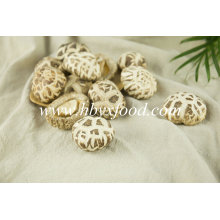 Champignons de fleurs blanches Légumes séchées savoureuses