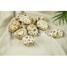 Vegetal de flor branca cogumelo seco saboroso