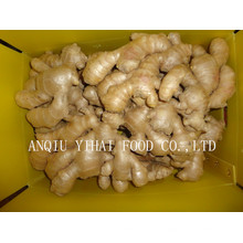 Professional Processing of Ginger