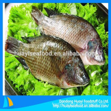 hot-selling frozen seafood frozen tilapia fish