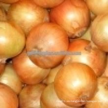 Cebolla amarilla / 5-7cm cebolla china fresca / pequeña cebolla roja