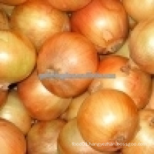 Yellow Onion/5-7cm chinese fresh onion/small red onion
