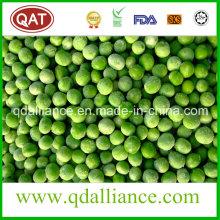 Guisantes verdes congelados IQF