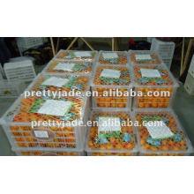 Nanfeng bebé mandarina