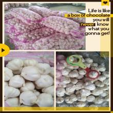 Precio de ajo blanco fresco de China