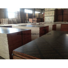 Fsc Formply Plywood Poplar Core Brown Film AA Grade