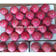 China Yantai Fresh Red Fuji Apple