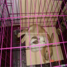 Cage en métal de lapin / poulet grillagé