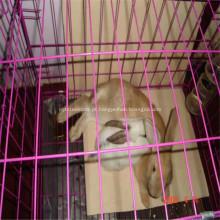Gaiola de malha de arame / frango Metal gaiola