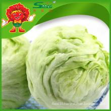 Factory price iceberg lettuce for sale