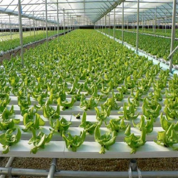 Agricultural Flat Hydroponic Commercial Hydroponics