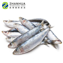 all types of price sea frozen fish sardine light-purse