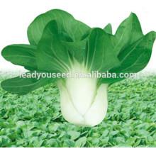 MPK03 Qiula semillas de pakchoi híbridos de madurez temprana para plantar