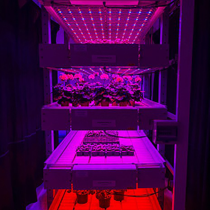 Greenhouse Hydroponic LED تزايد الضوء