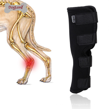 O invólucro protetor da junção do pé da compressão do cão da parte traseira do animal de estimação protege feridas e ferimento