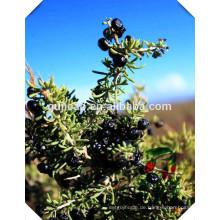 Chinesische Kraut-Medizin schwarze Goji-Beere, schwarzer Wolfberry Fruit-Extrakt