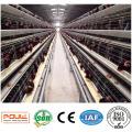 Китай заводского качества слоя Тип клетки Цыплятины