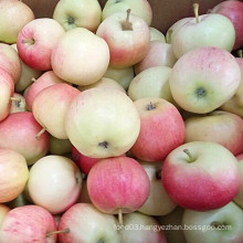 New Crop Unbagged Gala Apple