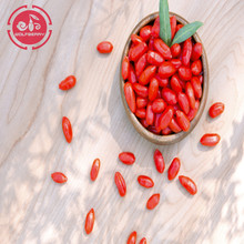Wolfberry / Lycium Barbarum / y học goji berries