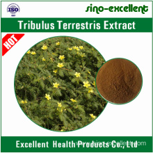 OEM for Green Tea Extract Saponins powder Tribulus Terrestris extract export to Romania Manufacturers