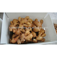 Chinese Shandong Yellow Color Fresh Gingrer 10kg/box, 9kg/box, 8kg/box