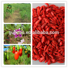 new crop Goji Wolfberry fruit Goji Berry Ningxia Goji Chinese herb medicine wolfberry