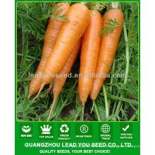 JCA02 forma uniforme semillas de zanahoria de cinco pulgadas, precio de las semillas de zanahoria
