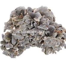 Meilleur prix organique extrait de coriolus versicolor poudre
