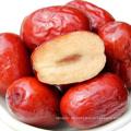 Shanxi süßes reines natürliches köstliches Datum